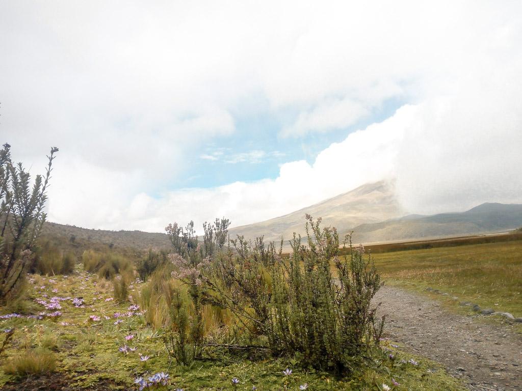 Volcano Cotopaxi Ecuador Quito Guide